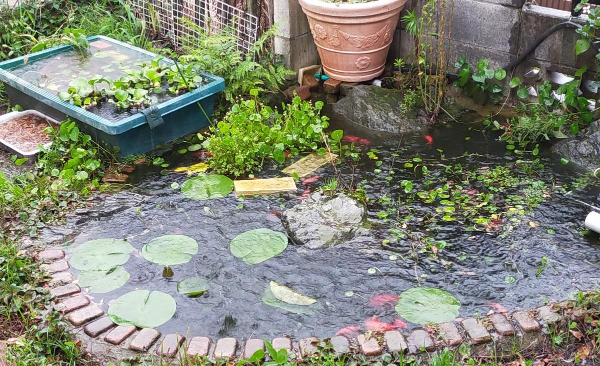 ゲリラ豪雨が降り注ぐ池