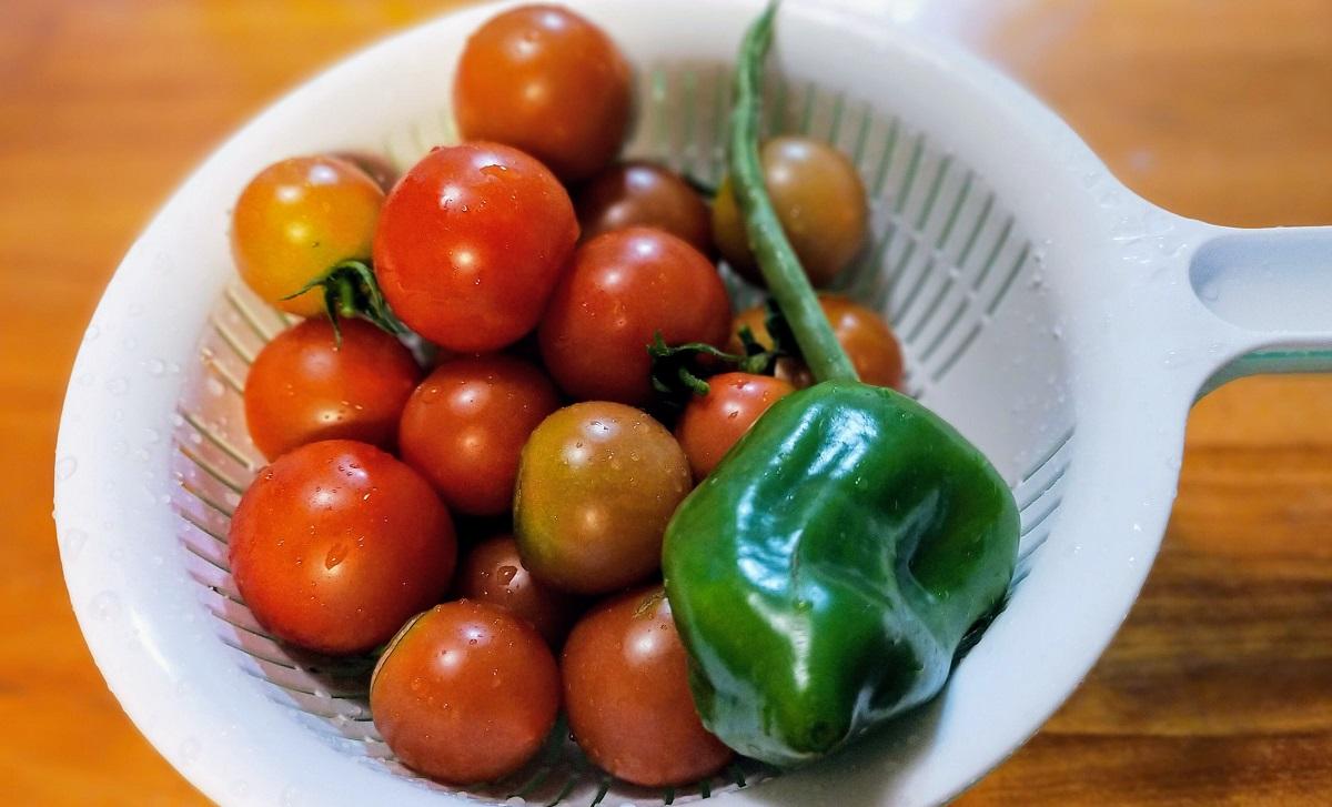 夏野菜。トマト、ピーマン、インゲン。