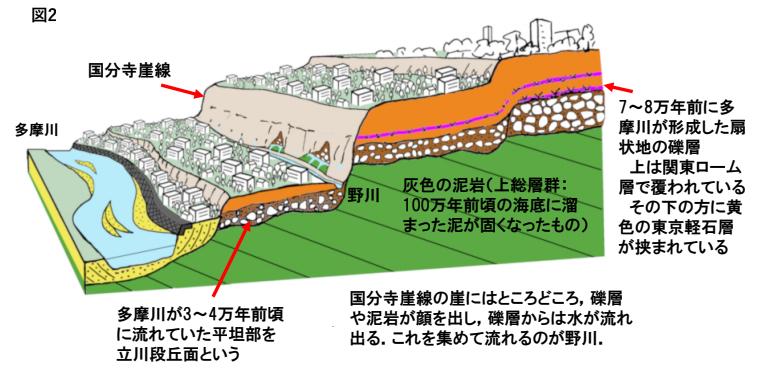 国分寺崖線断面/出典:首都圏地盤解析ネットワーク