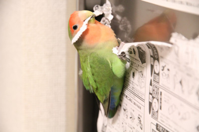 f:id:momo-chan-jf6:20101118203301j:image
