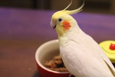f:id:momo-chan-jf6:20110128214733j:image