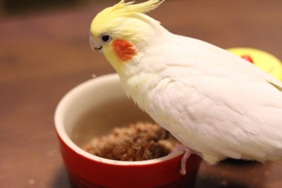 f:id:momo-chan-jf6:20110128214816j:image