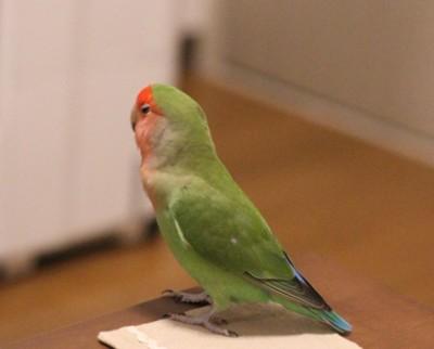 f:id:momo-chan-jf6:20110203194105j:image