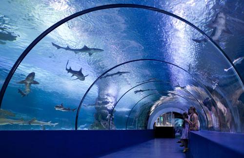 5回目の仮交際デートは水族館