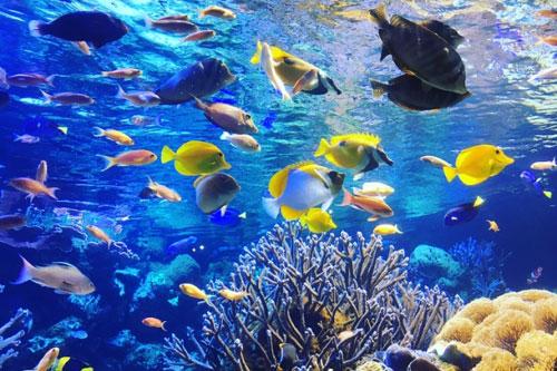婚活デート3回目は水族館