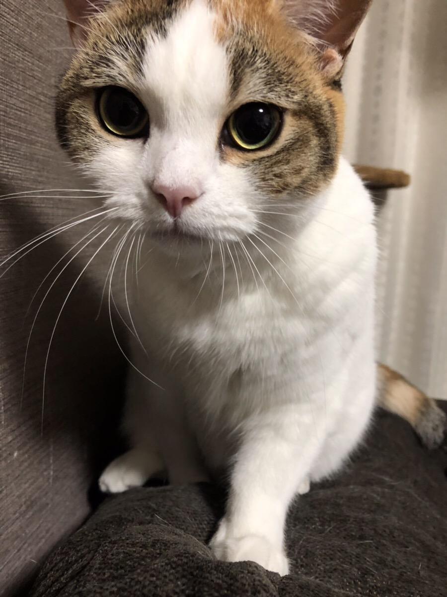 f:id:momokurikakiya:20191018161651j:plain