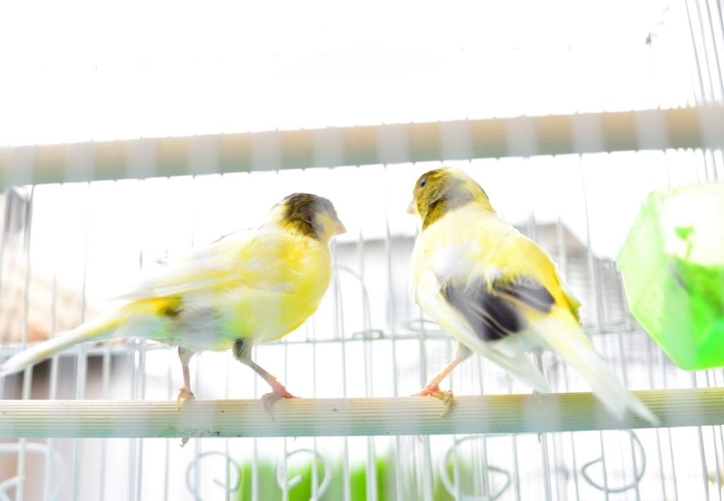 f:id:momonokinoko:20171007224824j:plain