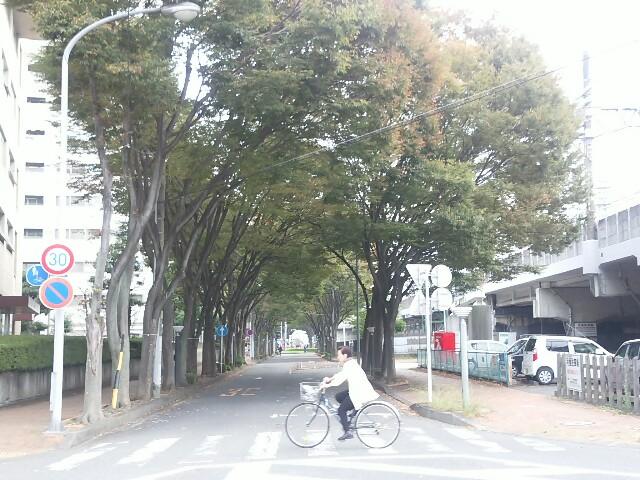 f:id:momosakukao1107:20161021231750j:image