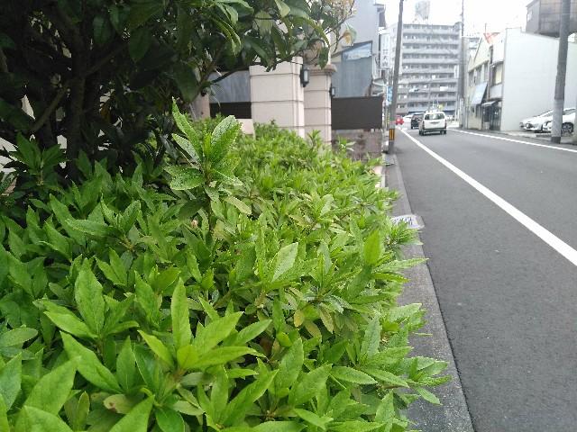 f:id:momosakukao1107:20170411231812j:image