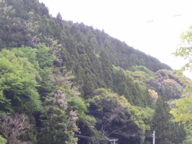 f:id:momosakukao1107:20170506175303j:image