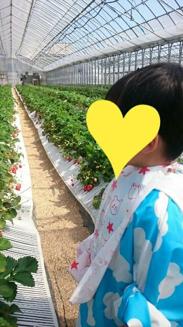 f:id:momosuke418:20180430085227j:plain