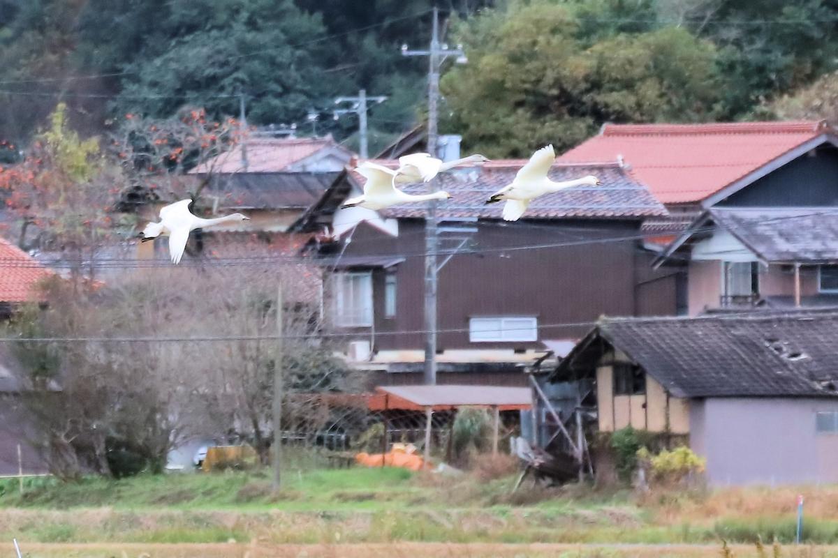 f:id:momotchi_blog:20201201151248j:plain