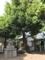 狛犬 [勝利八幡神社]