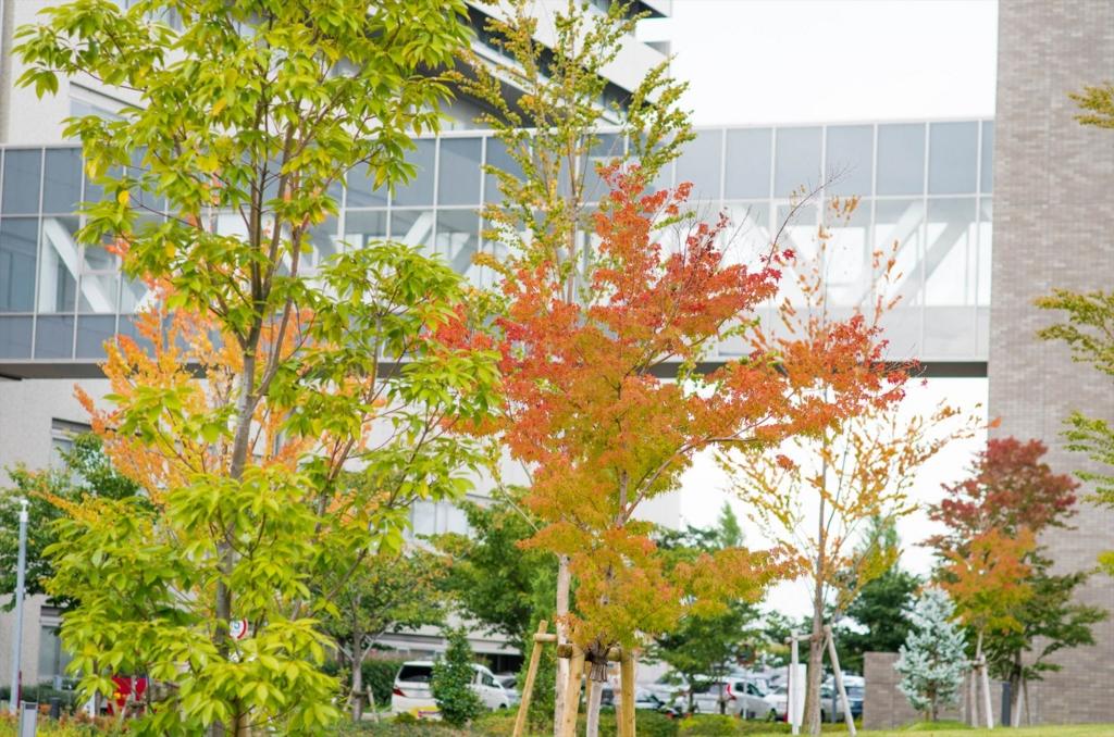 f:id:momotosuika:20161013144956j:plain