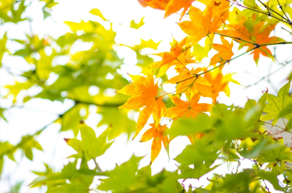 f:id:momotosuika:20161013145209j:plain