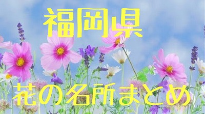 f:id:momotoyuin:20190815160459j:plain