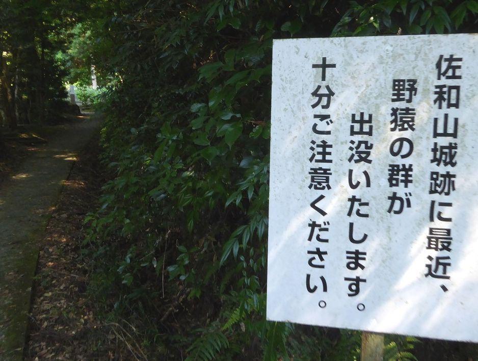 f:id:momoyorozu:20200914012017j:plain