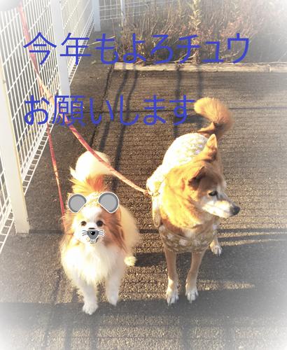 f:id:monachabimama:20200104145832p:plain