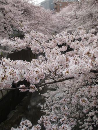 f:id:monaka:20100403091926j:image