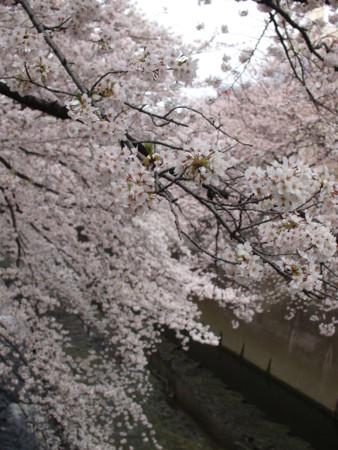 f:id:monaka:20100403092005j:image