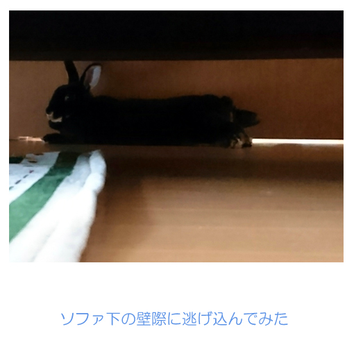 f:id:monakablackrabbit:20170702181935j:plain