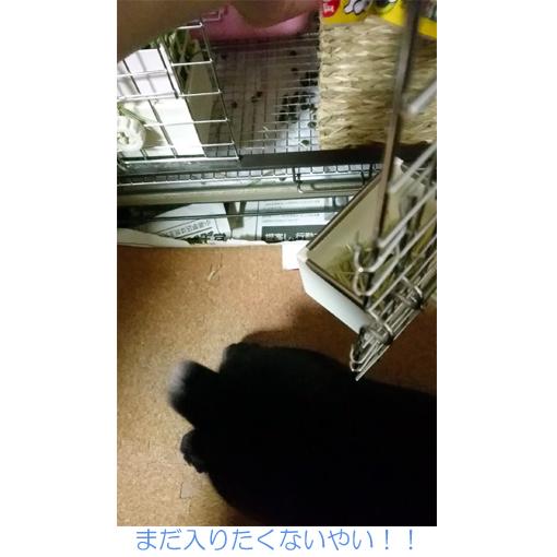 f:id:monakablackrabbit:20170905171502j:plain