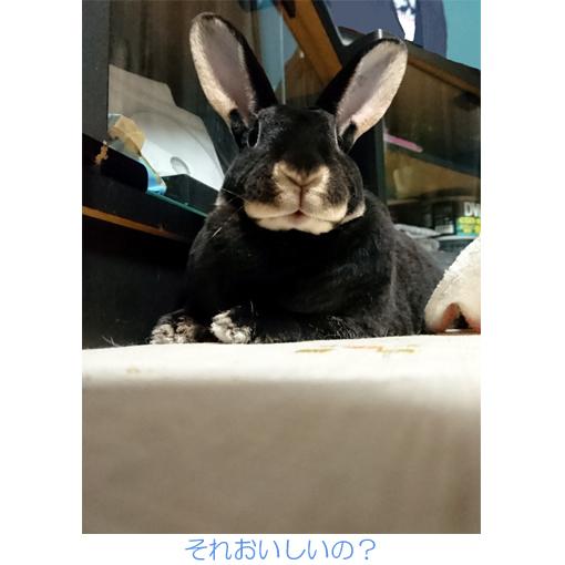 f:id:monakablackrabbit:20170920175731j:plain