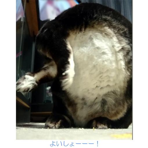 f:id:monakablackrabbit:20171006173724j:plain