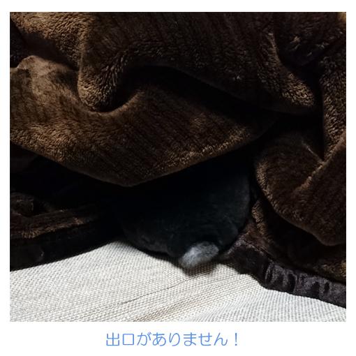 f:id:monakablackrabbit:20171011180856j:plain