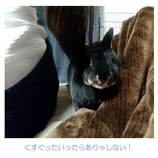f:id:monakablackrabbit:20171031180149j:plain