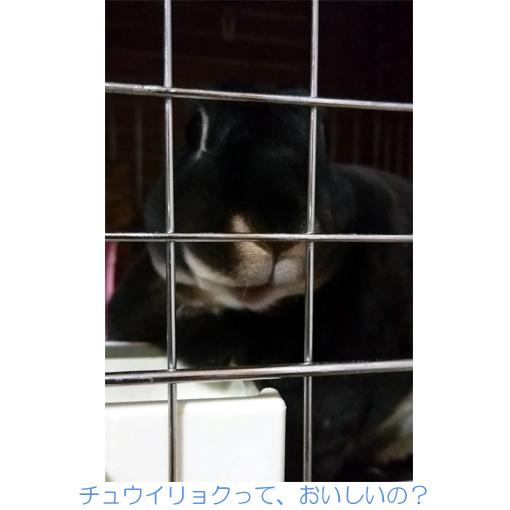 f:id:monakablackrabbit:20171205182510j:plain
