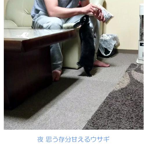 f:id:monakablackrabbit:20180110174326j:plain