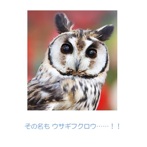 f:id:monakablackrabbit:20180116185500j:plain