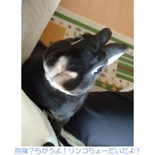 f:id:monakablackrabbit:20180205183751j:plain
