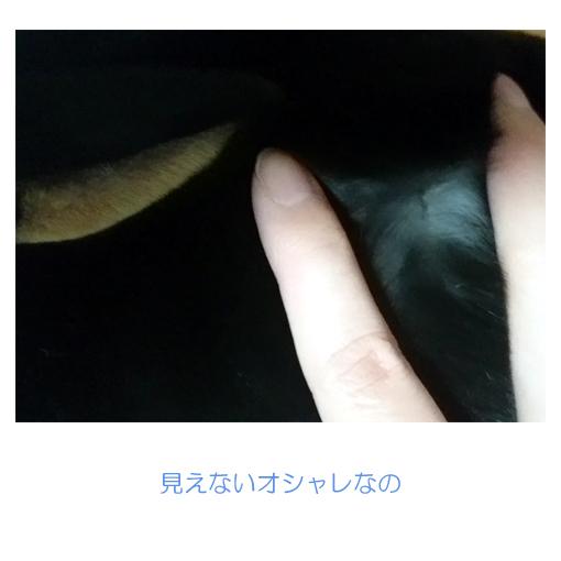 f:id:monakablackrabbit:20180216184025j:plain