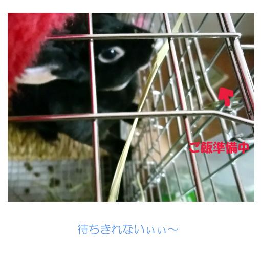 f:id:monakablackrabbit:20180301172420j:plain