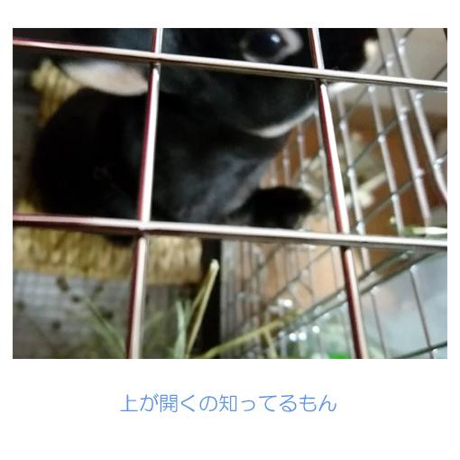 f:id:monakablackrabbit:20180301172544j:plain