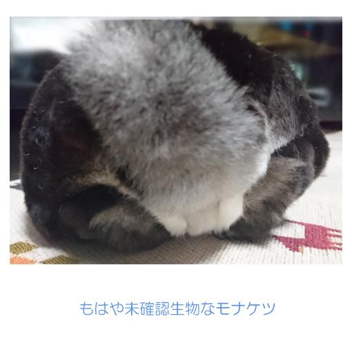 f:id:monakablackrabbit:20180314183257j:plain