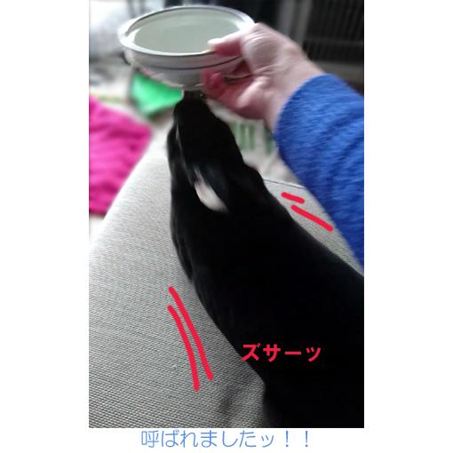 f:id:monakablackrabbit:20180321184817j:plain