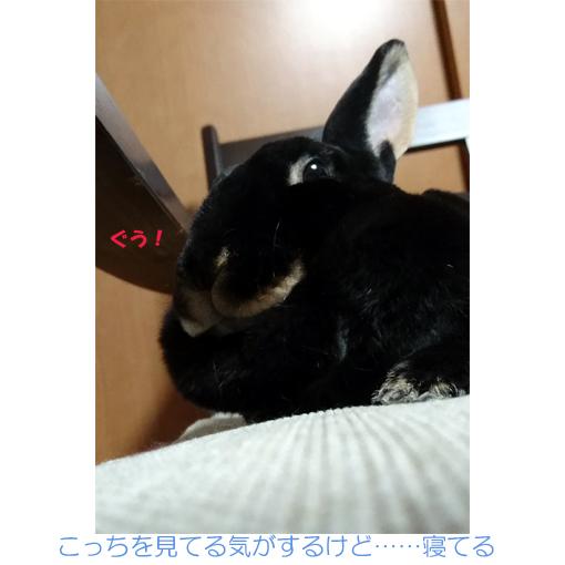 f:id:monakablackrabbit:20180428184540j:plain