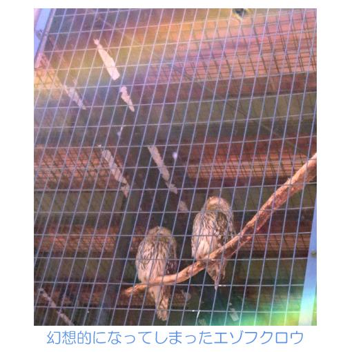 f:id:monakablackrabbit:20180528191135j:plain
