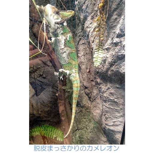 f:id:monakablackrabbit:20180528191825j:plain