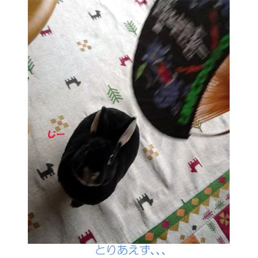 f:id:monakablackrabbit:20180615184430j:plain