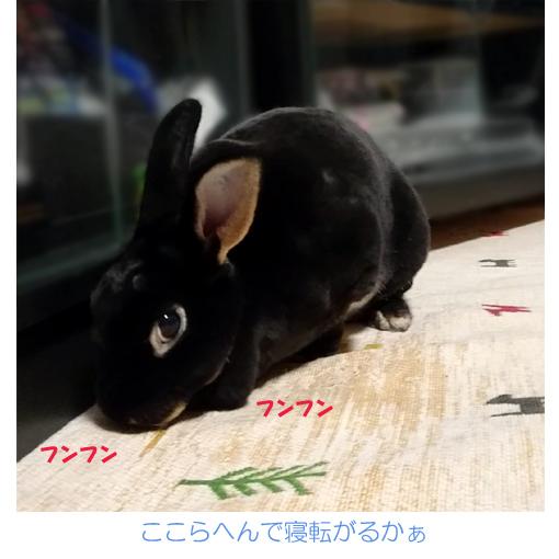 f:id:monakablackrabbit:20180629174112j:plain