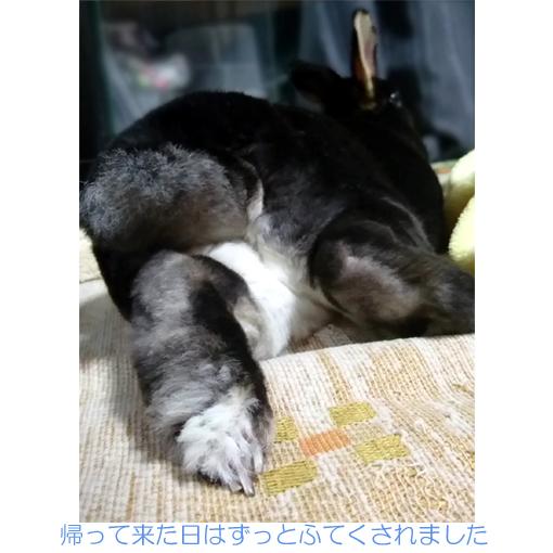 f:id:monakablackrabbit:20180818140123j:plain