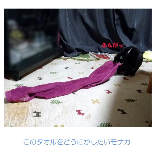 f:id:monakablackrabbit:20180923200314j:plain
