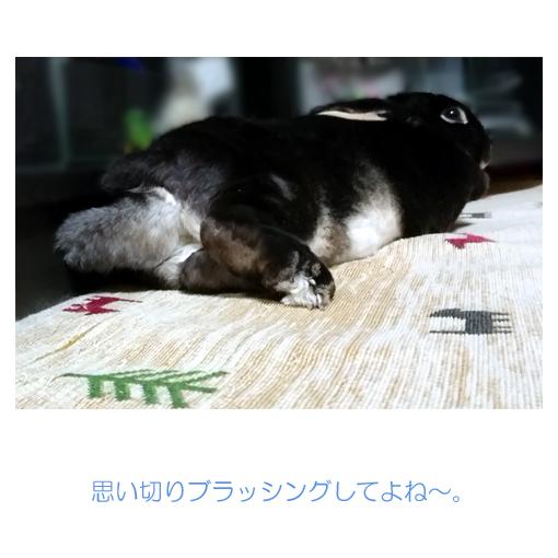 f:id:monakablackrabbit:20190730021712j:plain