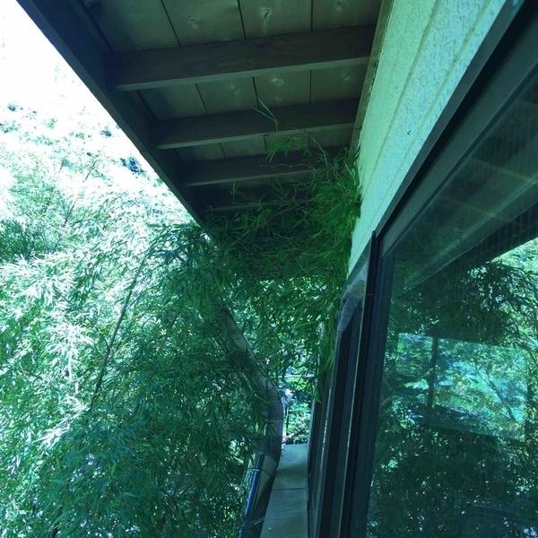 竹に壊される屋根