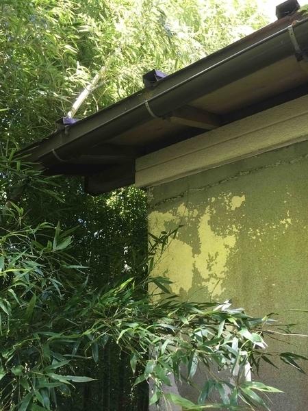 竹に囲まれた家