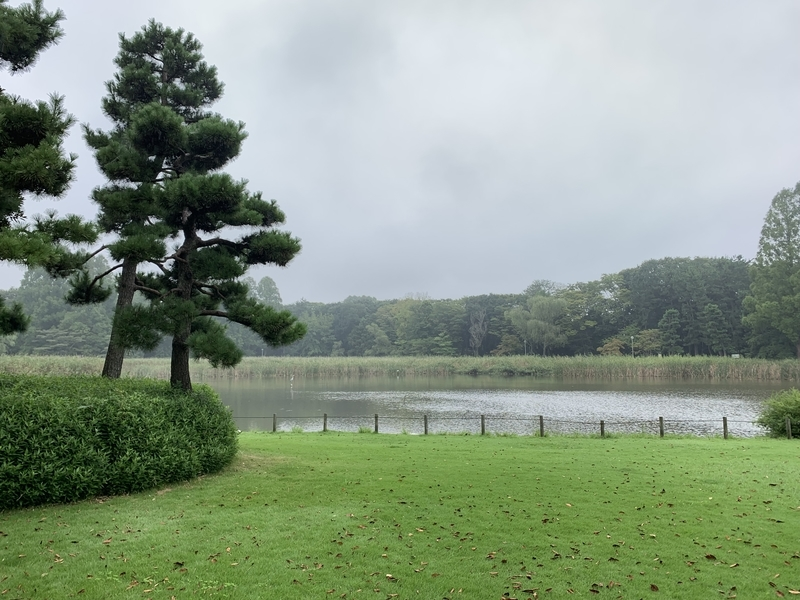 洞峰公園 池